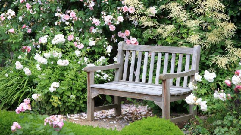 Garden Roses Image