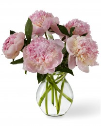The Pure Joy Spring Peonies